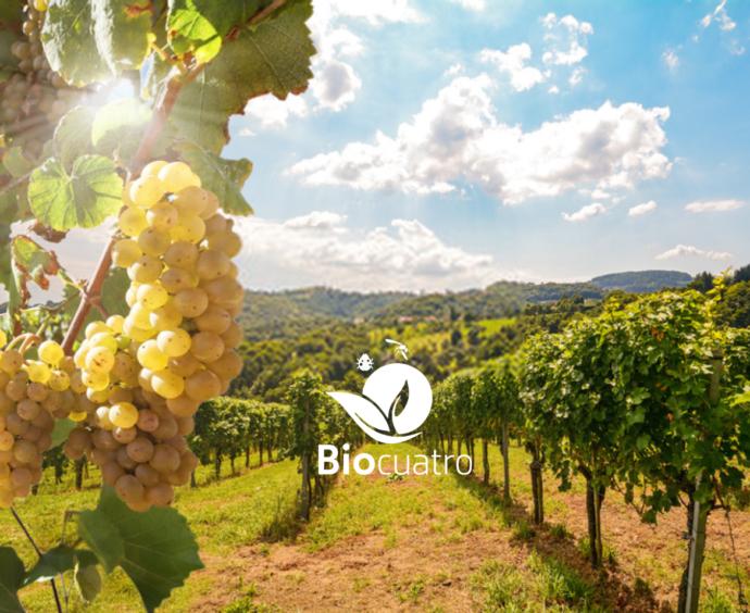 ¿Cómo usar Biosmart en el cultivo de Vid?
